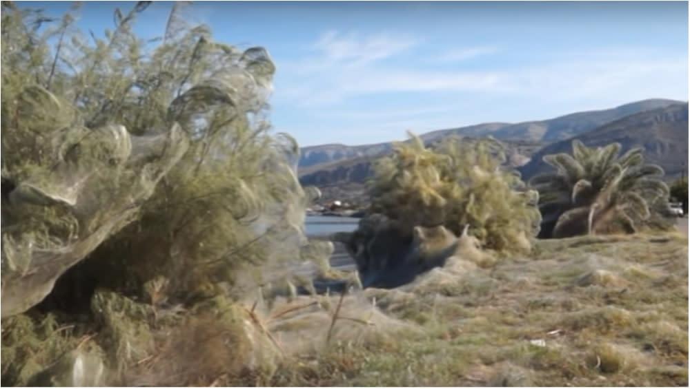 1,000 feet of spiderwebs blanket large part of Greek town
