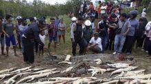 Turba mata a cientos de cocodrilos en criadero en Indonesia