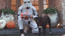 Tom Brady's dog doesn't recognize him in his Halloween costume and it's the cutest thing