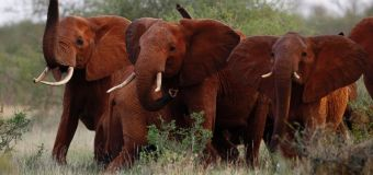 Stars lash out at Trump over elephants