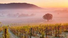 Sparkling Surrey: Englands' first vineyard hotel