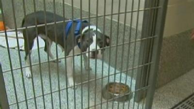 Do Millions Raised For Pet Charity Help Mass. Animals?