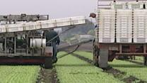 FDA Proposes New Food Safety Rules