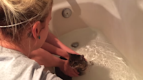 Bailey the Cat Does Not Want a Bath