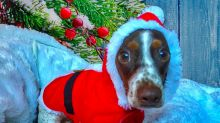 15 pets who are dressed and ready for the holidays