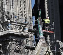 Drunk on smoke: Notre Dame's bees survive cathedral blaze
