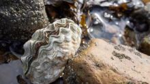 Oyster shells will give your soil a balanced boost