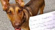Heartbreaking note reveals why dog was tied to a tree and abandoned