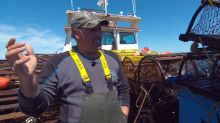Lobster season takes hit to protect North Atlantic right whale