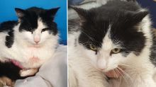 'Serial killer in the making': Cat found near death after being tortured