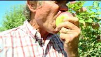 Better Fall 2013 Crop Means Fresher, Cheaper Apples