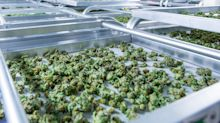 Aurora Cannabis's Target Price and Valuation