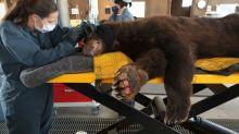 Rescue network seeks to save, rehab California's fire-stricken wild animals