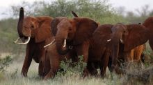 Trump puts decision to allow elephant hunting trophy imports 'on hold'