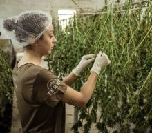 10 Best Weed Stocks to Buy Now