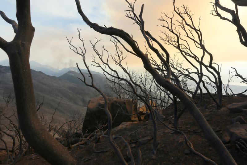 California puts one-year halt on insurers dropping customers in wildfire-prone areas