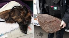 Woman, 31, is arrested after dog found dumped in river attached to large rock