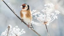 Which plants are the best bird feeders?