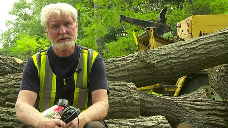 Untrained workers create 'wild west' in arborist industry