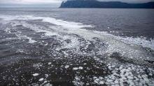 """Russie : une """"catastrophe écologique"""" provoque la mort massive d'animaux marins près des côtes du Kamtchatka"""