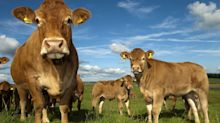 Dairy needn't be scary – just look at our calves | Letters