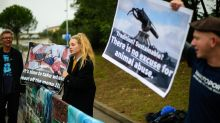 Battle lines harden at global whaling meeting