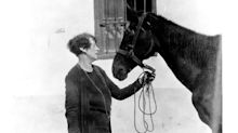 The amazing true story of Dorothy Brooke - the socialite who dedicated her life to saving war horses