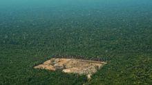 US, EU hardwood imports fuel Amazon destruction: Greenpeace