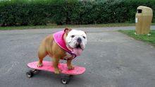 Dog teaches herself to skateboard