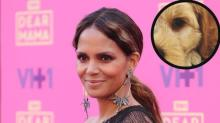 Halle Berry's New Puppy Is So Cute You May Squee