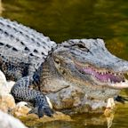 Tennessee Police Warn Citizens Of 'Meth-Gators,' Then Later Clarify Comments