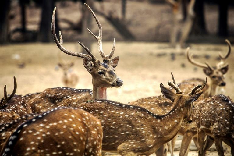 These deer were rescued from a ranch in Tabasco state (AFP Photo/RASHIDE FRIAS)