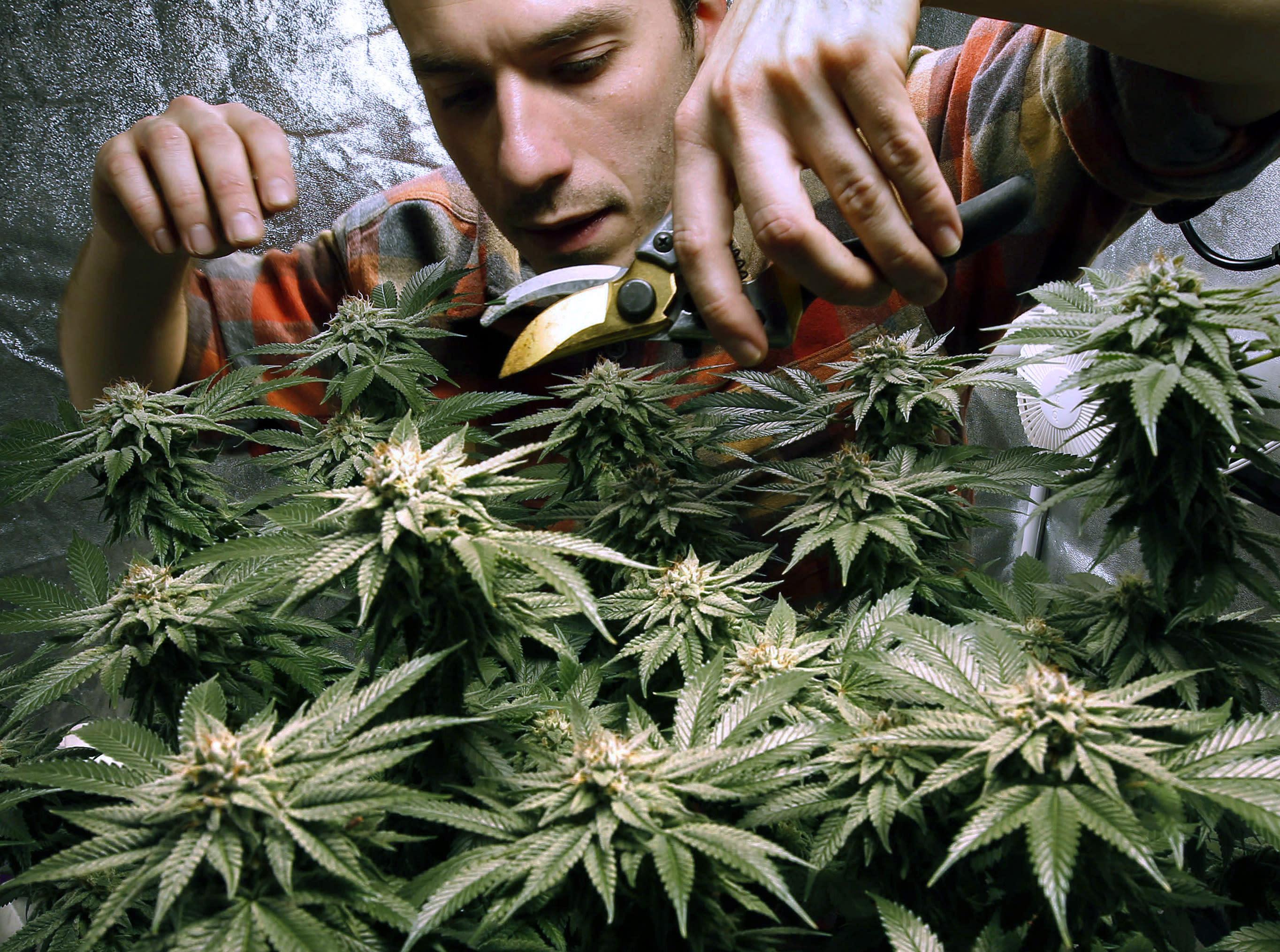 Онлайн видео марихуана закон об употребление марихуаны