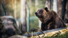 Bear of the Day: Wynn Resorts