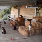 Getting paid to cuddle cats on a Greek island? Sign me up!