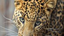 Top 5 Most Endangered Animals