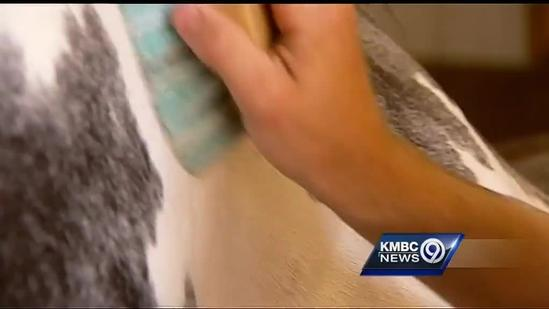 Mo. teen uses paint horses to help veterans