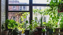 Diese Zimmerpflanzen helfen gegen trockene Haut