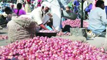 Pune: Allow onion exports, says Pimpalgaon market leader