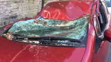 Falling tree flattens car in Sheffield