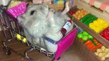 Happy Hamster Nibbles Seeds in Miniature Supermarket