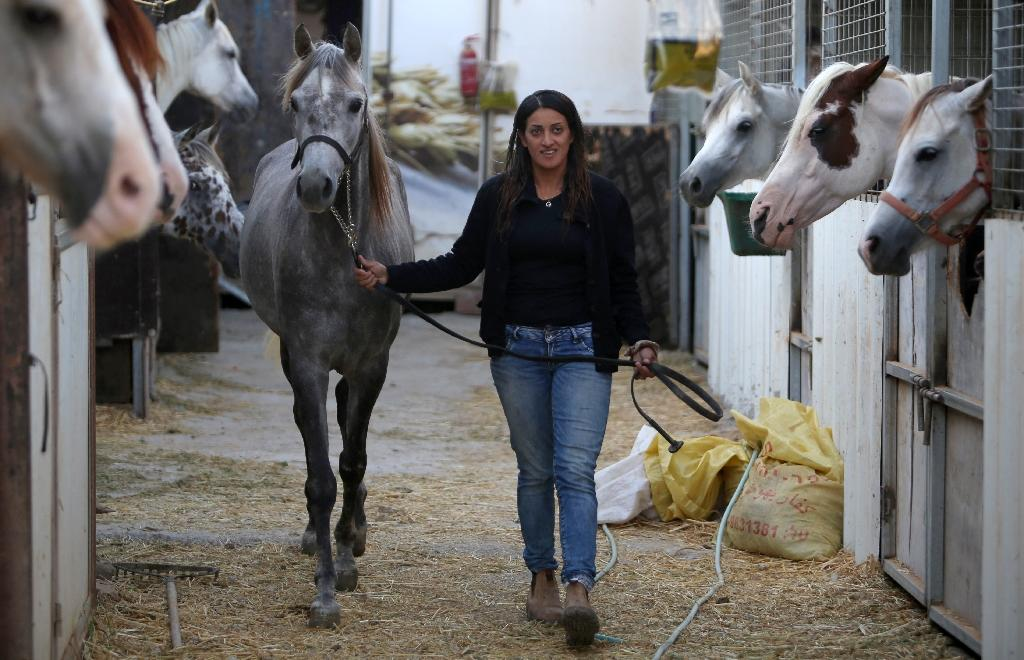 Druze horsewoman and trainer Raja Kheir leads a horse back to the stables on her ranch -- the only Arab centre in the area -- in the southern foothills of Mount Hermon, north of the Golan Heights (AFP Photo/Jalaa Marey)