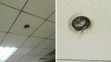 Be afraid: Sneaky office cat is spying on you to make sure you work