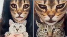 【有片】貓奴試玩「貓臉影相APP」 嚇親喵星人嬲到出爪