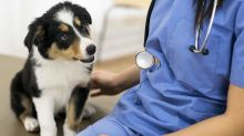 Outbreak of deadly dog virus prompts warning from SPCA: What is parvo?