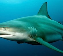 A shark attacked a woman in Hawaii, and authorities are warning it's 'still in the area'