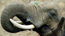 Foreigners arrested over ivory bracelets at Kenyan airport