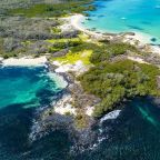 Galapagos Islands to reopen to tourists after wildlife blooms during pandemic