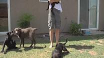 Man rescues 7 abandoned dogs