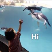 在鯊魚旁邊醒過來?!帶孩子在海生館住一天!【媽爹日常】